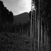 La forêt entre St Odile et les ruines du château d'Andlau
