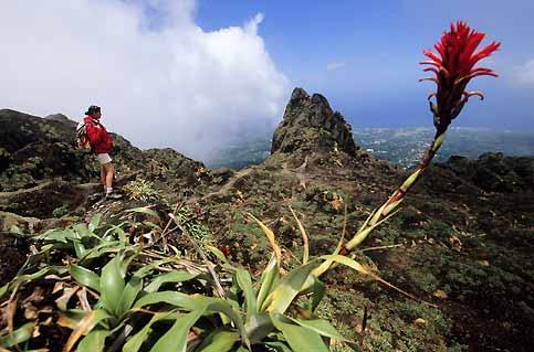 Le cratère de la Soufrière, à 1 467 m d'altitude, dont l'activité ne cesse jamais, si l'on en croit les fumerolles dans le ciel du Parc national de la Guadeloupe.