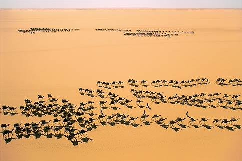 Sans un signe, avec un parallélisme «déroutant», deux caravanes se croisent au cœur du désert du Ténéré. L'une va chercher du sel, l'autre en rapporte. C'est ainsi depuis des siècles. Une à une, pendant deux mois, les méharées traversent le désert, depuis le sud du Niger jusqu'au nord du Nigeria, pour rejoindre les salines de l'oasis de Bilma. D'une rare beauté, cette photo fait partie de l'exposition «Les Sommets de l'image», installée sur les pistes de ski de Courchevel à l'occasion du grand forum international «Les Ateliers de la Terre», où de nombreuses entreprises se réunissent ce week-end pour agir ensemble en faveur du développement durable.