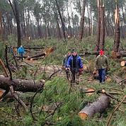 La forêt des Landes a été touchée à 60%.