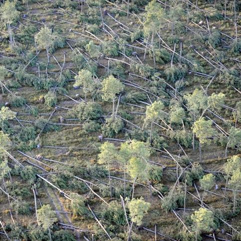 Le massif des Landes de Gascogne est le plus grand d'Europe, avec 1,2 million d'hectares, dont 80 % de forêts plantées en pins maritimes.