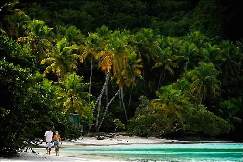 Saint John, la plus petite et la plus belle des îles Vierges américaines marie avec grâce criques turquoise, collines verdoyantes et sable fin ; un décor idyllique pour les promenades à deux.