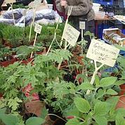 Chez Hermione Boeher, on trouve des herbes printanières et des plantes vivaces.