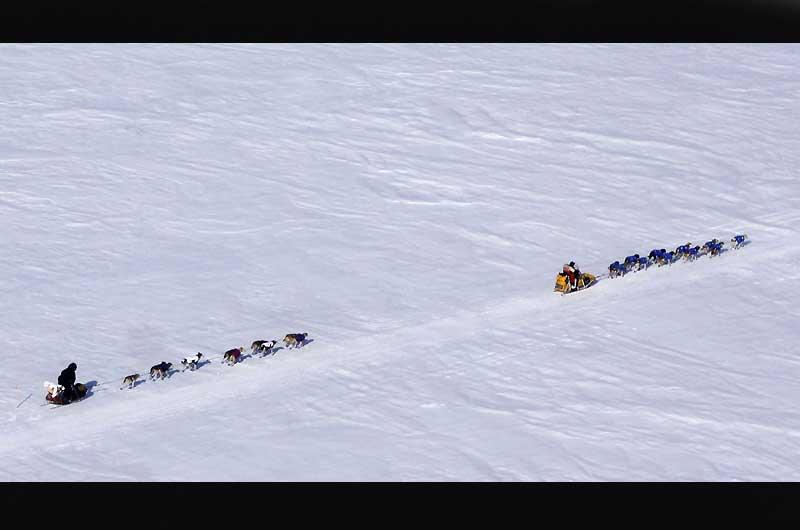 L'Iditarod, en Alaska, est une course annuelle de chiens de traineau qui commence le premier samedi du mois de mars, et dont le parcours s'étend sur 1757 km. Cette compétition commémore un exploit : l'hiver 1925 une épidémie de diphtérie frappe la ville de Nome. Alors que la glace et un blizzard persistant empêchaient tout envoi de sérum par avion ou bateau, un traîneau parvint à rejoindre Nome avec le sérum salvateur.
