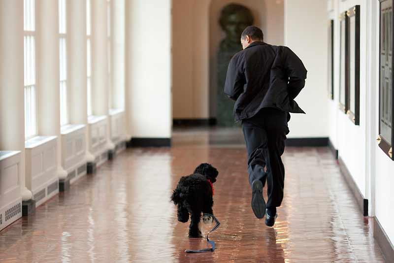 Attendue depuis des mois par les Américains, la présentation officielle du nouveau chien de la Maison-Blanche risque de voler la vedette, mardi, à un discours de Barack Obama sur l'économie. Il s'appelle Bo, il a six mois, c'est un chien d'eau portugais au pelage frisé noir, et c'est un cadeau du sénateur Edward Kennedy au président américain.