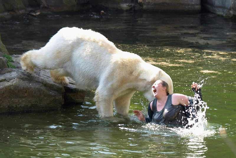 Plus de peur que de mal pour cette jeune allemande de 32 ans, au zoo de Berlin. Pour des raisons inexpliquées, elle a sauté dans la fosse où les ours polaires étaient en train d'être nourris. L'un des ours s'est alors jeté à l'eau et l'a mordue très grièvement. Elle s'en tire avec quelques jours à l'hôpital.