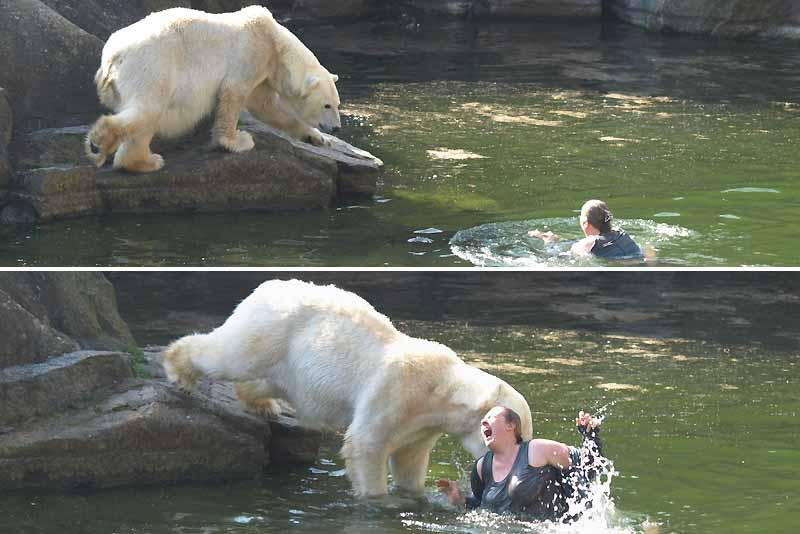 Personne ne sait vraiment pourquoi cette jeune Allemande de 32 ans, originaire de la région du Brandebourg, a soudainement décidé de franchir les grilles de la fosse aux ours polaires du zoo de Berlin et de se jeter dans l'eau. Idées suicidaires, défi ou tout simplement inconscience ? La question demeure sans réponse. Si cinq des six plantigrades hébergés par le zoo se sont contentés de regarder la scène, un autre, plus agressif, s'est jeté à l'eau et l'a mordue aux bras et aux jambes. Blessée grièvement, la jeune femme n'a dû son salut qu'au courage des soigneurs, qui ont tout fait pour éloigner l'ours de sa proie. La victime a été hospitalisée et opérée à plusieurs reprises.