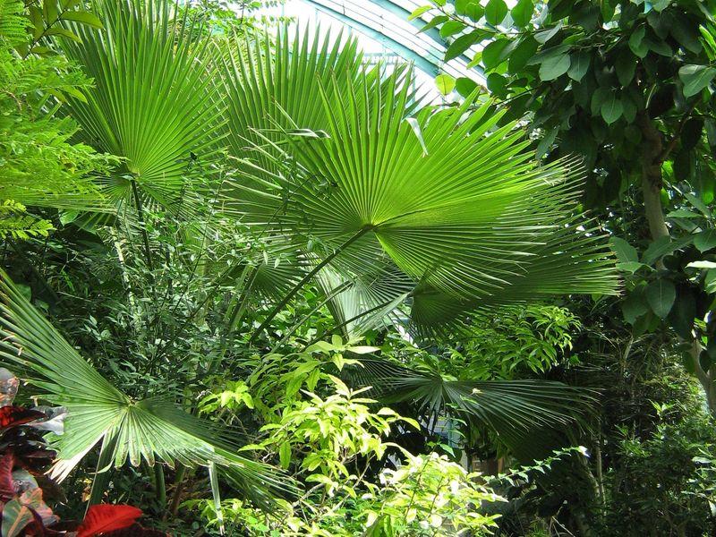 Situé à l'orée du Bois de Boulogne, le jardin des Serres d'Auteuil est un jardin botanique géré par la Ville de Paris. Créé par la volonté de Louis XV et aménagé en 1761, c'est un véritable havre de paix en périphérie de la capitale, dédié à la promenade et à la découverte.