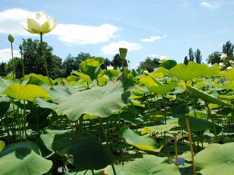 Réputé pour ses riches collections de fleurs, ses expositions horticoles et ses jardins thématiques, le Parc Floral de Paris est un lieu incontournable pour tout amateur d'art floral. C'est également le lieu du Paris Jazz Festival qui a lieu aux mois de juin et juillet.