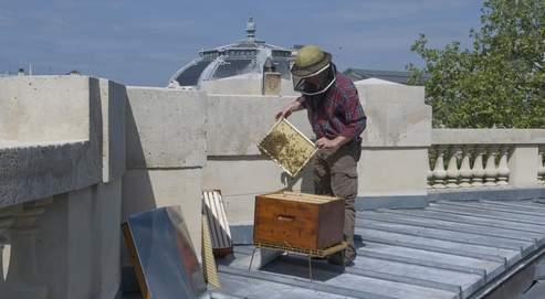 L'abeille vit mieux en ville qu'aux champs