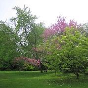 L'arboretum Vilmorin