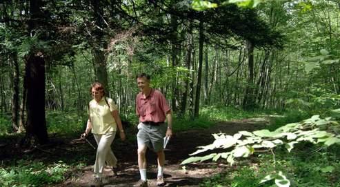 «La forêt est moins sensible à la chaleur qu'au manque ou au trop plein d'eau» analyse un écophysiologiste.