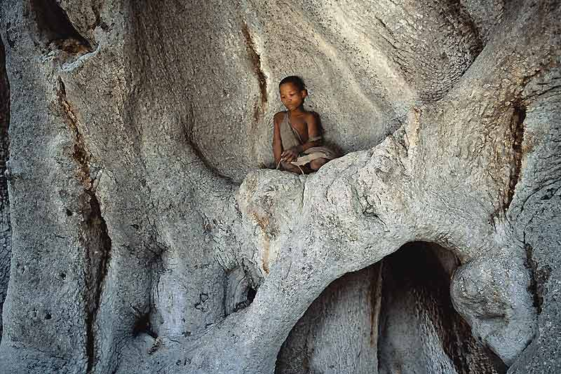 Une jeune Bochiman s'est lovée au creux d'un majestueux baobab en Namibie... Quand la nature devient refuge.
