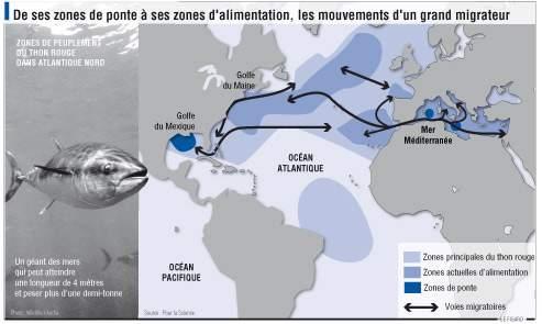 La reproduction des thons rouges a lieu entre mai et juin au même moment que la pêche qui a duré du 15 avril au 15 juin. Les poissons sont particulièrement fragiles durant cette période.