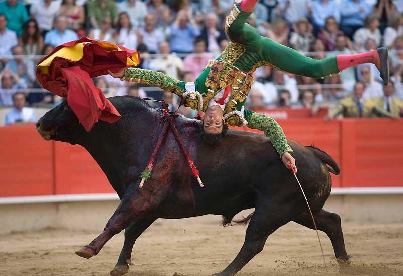 Arènes de la Monumental de Barcelone, le 5 juillet dernier. Au grand bonheur des aficionados, Jose Tomas avait déjà sorti l'épée du coup de grâce, mais son musculeux adversaire à cornes ne l'a pas entendu de la sorte. Il souhaitait obtenir un sursis. Visiblement agacé par les banderilles, la muleta et les gesticulations chorégraphiques de son vis-à-vis costumé, le taureau (dont le nom ne nous a hélas pas été communiqué) a offert au matador un aller-retour express dans le ciel de Catalogne, histoire de lui remettre les idées en place. Fort heureusement, Jose Tomas en est sorti indemne. Ce qui n'est pas le cas du taureau. Requiescat in pace !