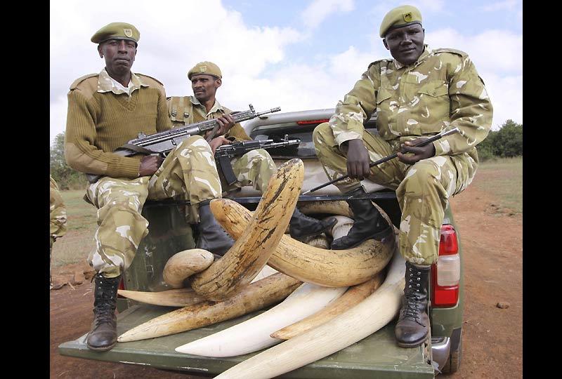 Depuis deux ans, le commerce de l'ivoire est interdit sur tout le territoire kenyan. Ce qui n'empêche pas les trafiquants de continuer à traquer les éléphants pour leurs défenses. Les gardes nationaux doivent patrouiller inlassablement dans les réserves.