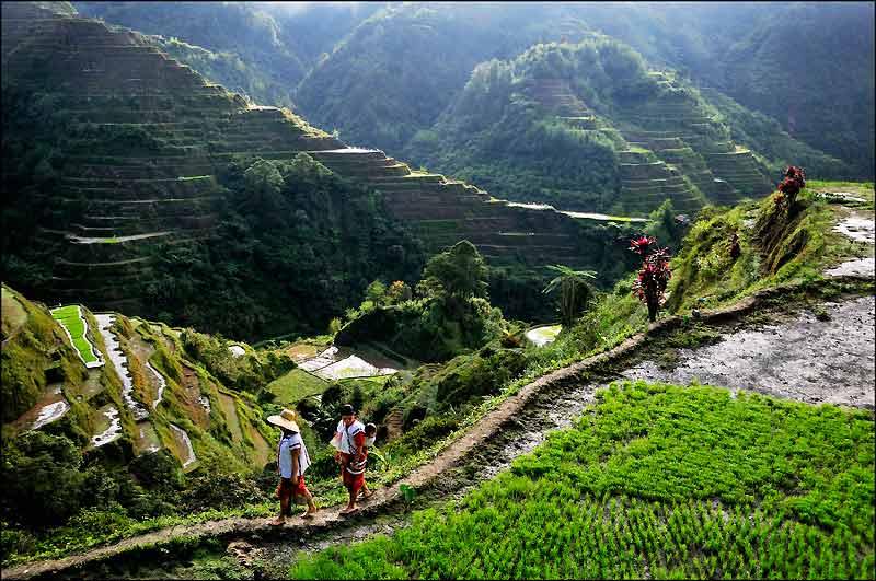Classées par l'Unesco en 1995, les rizières de Banaue, qualifiées de «huitième  merveille du monde», sont depuis 2001 sur la liste du patrimoine mondial en péril.