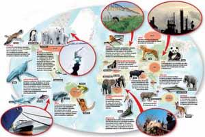 Animaux en danger : ce qui les menace. Cliquer ici pour visualiser l'infographie en taille réelle.