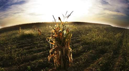 Le Conseil d'Etat annule 5 dispositions du décret sur les OGM