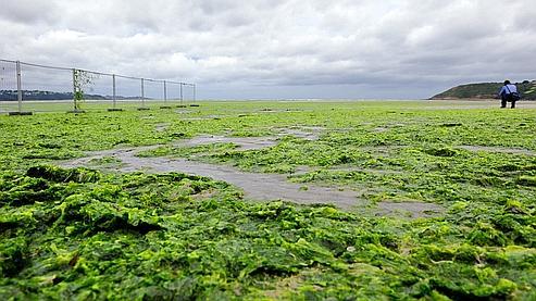 Algues vertes : un rapport officiel  pour éviter les risques sanitaires
