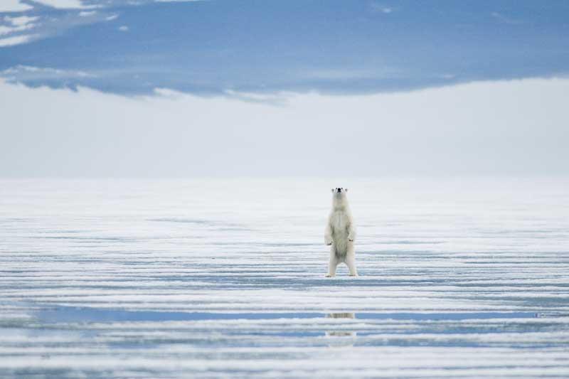 Un nouveau rapport met en évidence les impacts du changement climatique en Antarctique