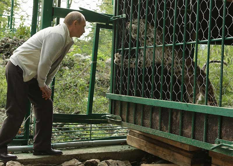 Face-à-face entre deux fauves dans le Parc National de Sochi, en Russie, où le Premier Ministre Vladimir Poutine est venu observer un léopard en captivité, samedi 19 septembre.