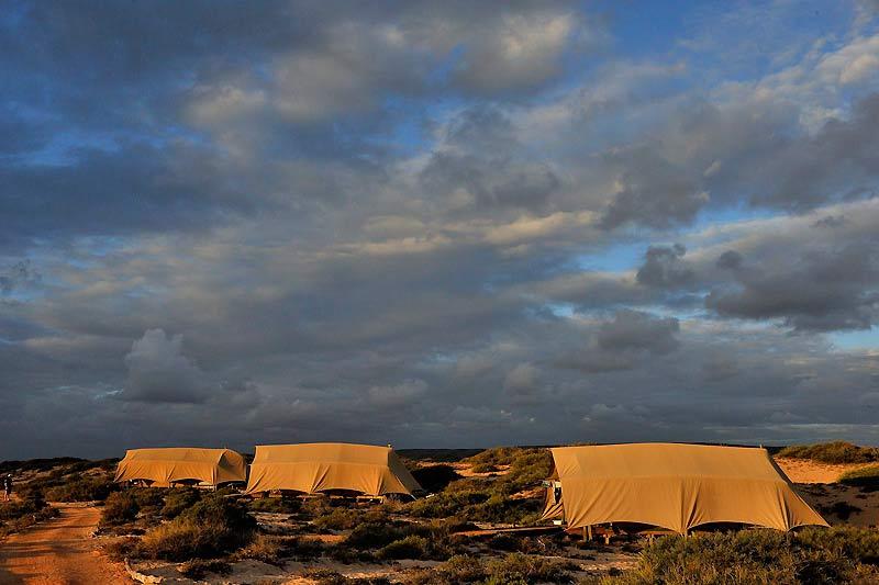 Intégré dans le paysage et entièrement démontable, le camp de luxe de Sal Salis a limité au strict minimum son impact sur le milieu naturel.