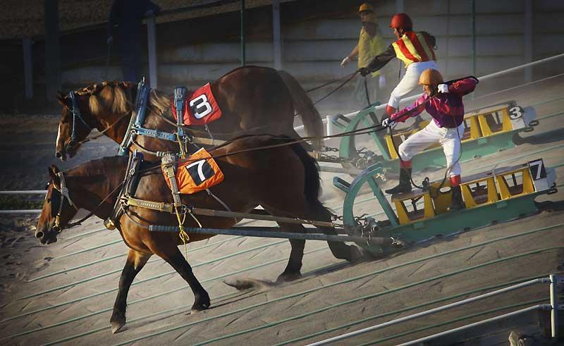 Les Japonais ne sont pas seulement de grands fondus de courses classiques. Ils sont aussi les inventeurs des «Ban-Eï Keiba», ces courses réservées… aux chevaux de trait ! L'objectif : placer côte à côte deux chevaux de trait attelés à une sorte de traineau en acier lesté, sur une distance de 200 mètres. Le poids total, harnachement et driver confondus, varie entre 500 kg et une tonne et le cheval doit passer deux buttes.
