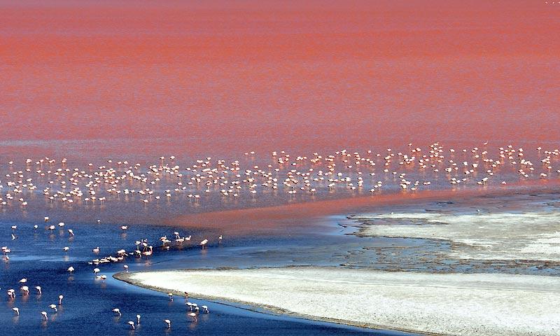 Près de la frontière chilienne, le parc national bolivien de San Luis n'est pas qu'une réserve ornithologique mais aussi la convoitise des grands groupes industriels. Avec un gisement estimé à dix milliards de tonnes de sel, il constitue le plus grand réservoir de lithium (environ 100 millions de tonnes).