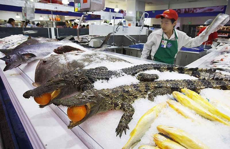 On vend de tout sur les marchés chinois, comme ici du crocodile sur les étals de Guangzhou, le mardi 27 octobre.