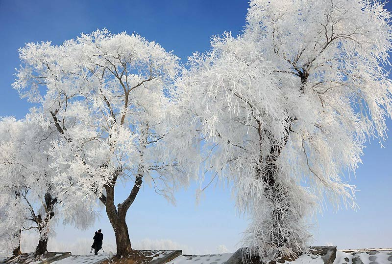 Une image de Noël avant l'heure nous montre des arbres recouverts de givre le long du fleuve de Songhua, dans la ville de Jilin, en Chine, le 28 novembre.