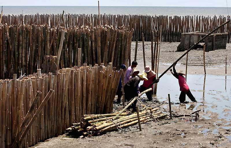 Un barrage d'un nouveau genre. Dans le golfe de la Thaïlande, des villageois tentent de juguler les effets du changement climatique en usant simplement de bambou. Ils réussissent ainsi à repousser les vagues qui engloutissaient progressivement la communauté de Kok Karm.