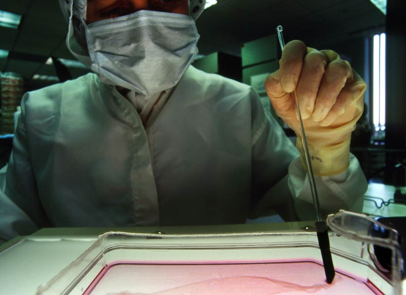 />Fabriquer de la peau grâce aux cellules souches.</b> On pourra peut-être disposer bientôt d'épiderme humain en quantité illimitée pour soigner les grands brûlés. C'est en tout cas une perspective que laisse entrevoir une équipe de chercheurs français de l'Inserm et du Généthon qui a fait cette année une avancée importante dans le domaine des cellules souches embryonnaires humaines. Christine Baldeschi et Marc Peschanski sont en effet parvenus à forcer des lignées de cellules souches embryonnaires, maintenues en culture, à produire des quantités illimitées de kératinocytes. Cette découverte pourrait améliorer sensiblement l'arsenal thérapeutique pour les brûlés graves, ceux dont l'étendue et la profondeur des lésions mettent en jeu le pronostic vital.&nbsp;&raquo; height=&nbsp;&raquo;380&Prime; /></p> <p><strong>Fabriquer de la peau grâce aux cellules souches.</strong> <strong><font face=