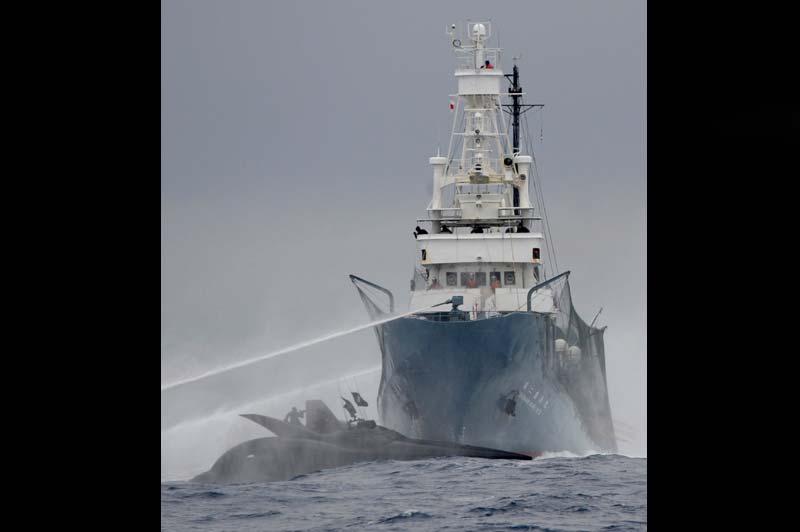 Bataille navale en Antarctique. Un trimaran ultra-rapide utilisé par des écologistes australiens pour traquer les baleiniers japonais a été détruit après un accrochage avec les pêcheurs en Antarctique. Les six membres d'équipage de l'Ady Gil ont été secourus indemnes. L'ONG Sea Shepherd lutte contre la chasse à la baleine depuis plus de six ans, 1500 mammifères ont ainsi pu être sauvés.