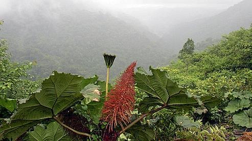 «Les forêts tropicales, un pactole biochimique»