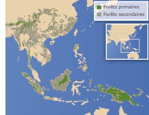 Dans certaines parties d'Asie du sud-est, les forêts tropicales primaires ont déjà disparu.