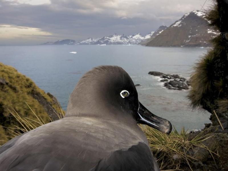 <b>NATURE PRESSE MAGAZINE –</b> Le premier prix revient à l'enquête du National Geographic intitulée ''South Georgia, Antartica''.