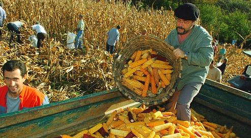 Agriculture: les cinq défis de la décennie