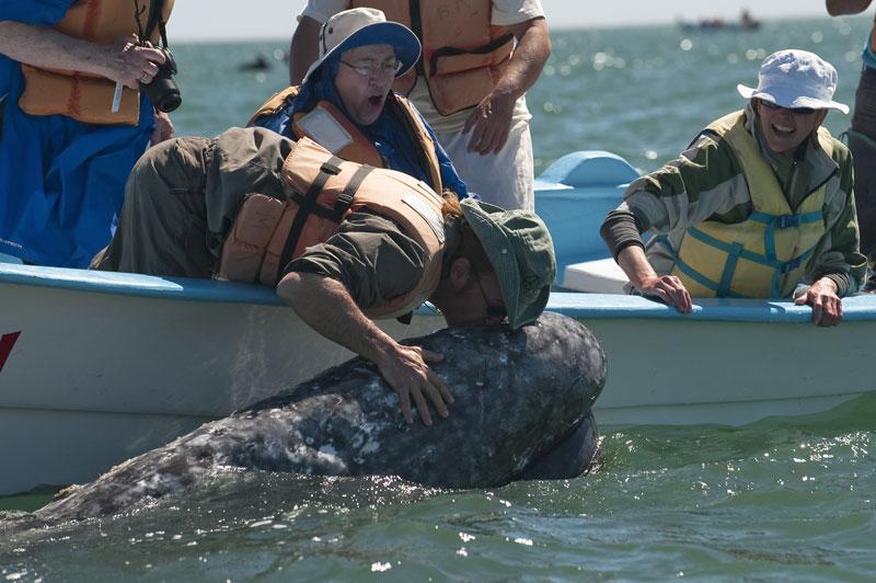 Dans la lagune de San Ignacio, au Mexique, une baleine grise s'approche du bateau, la tête à fleur d'eau et un touriste l'embrasse. C'est Pachico Mayoral, premier homme à avoir osé toucher une baleine, qui a « inventé » cette nouvelle forme de tourisme.