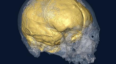 Le cerveau de Cro-Magnon reconstitué
