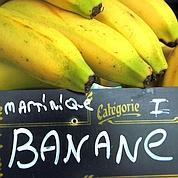 Nouveau coup dur pour la banane antillaise