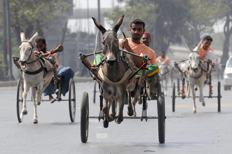 Dans les rues de Karachi, au Pakistan, une manifestation sportive traditionnelle a été organisée dimanche 14 mars : celle d'une course de chariots tirés par des ânes.
