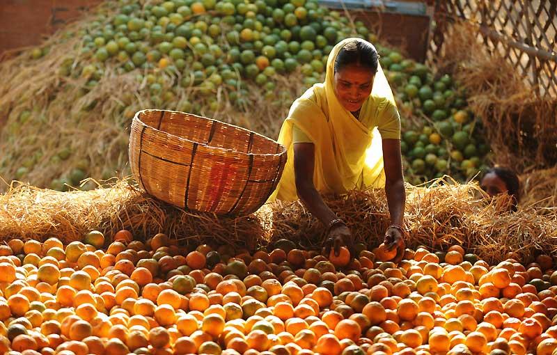 Mardi 23 mars, à Allahabad. Cette femme indienne sélectionne les oranges qui seront ensuite vendues sur les marchés de la ville.