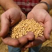 Soja, maïs et blé: les gagnants de la semaine