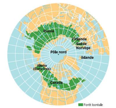 Les forêts boréales russes ont une importance clé dans l'équilibre