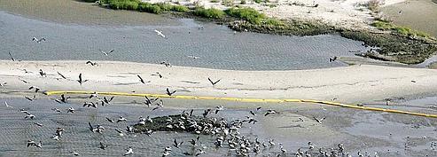 Les côtes de Louisiane touchées par la marée noire<br/>