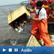 Les pêcheurs s'attendent au pire