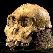 L'australopithèque au crible du synchrotron