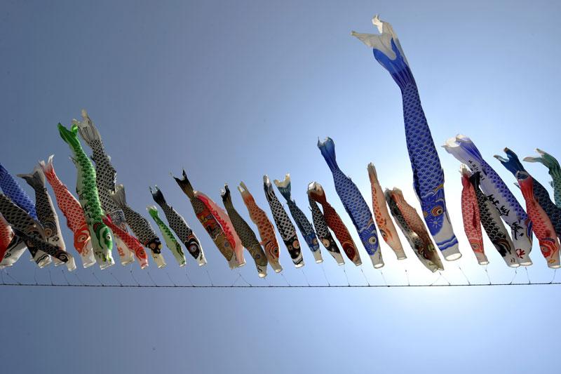 Le 2 mai, le Japon a fêté Kodomo no hi qui célèbre les enfants et est entouré de nombreux rites et symboles comme ici où des manches à air en forme de carpes koï sont accrochées le long de perches en bambou. Elles représentent la force et la persévérance pour encourager les enfants, particulièrement les garçons.