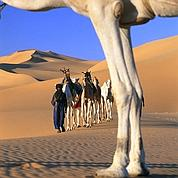 Les kamikazes du désert